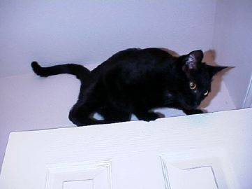 Duncan, the black cat, on top of the door